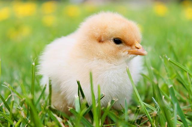 Comment savoir si des œufs sont encore bon