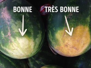 pasteque_bonne_tres_bonne