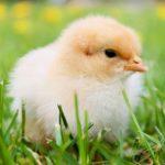 Comment savoir si des œufs sont encore bon ?
