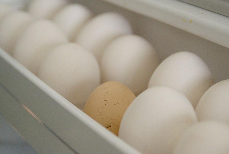 Zoom sur les moyens pratiques pour conserver les œufs