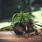Les bienfaits du cannabis